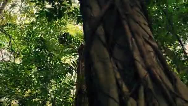 Létání v džungli stromy s blikající Sun