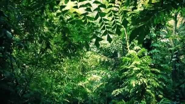 Přesun pod husté džungle vrchlíku