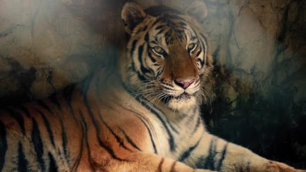 Tigris pihen a sötét barlangban, a napfény