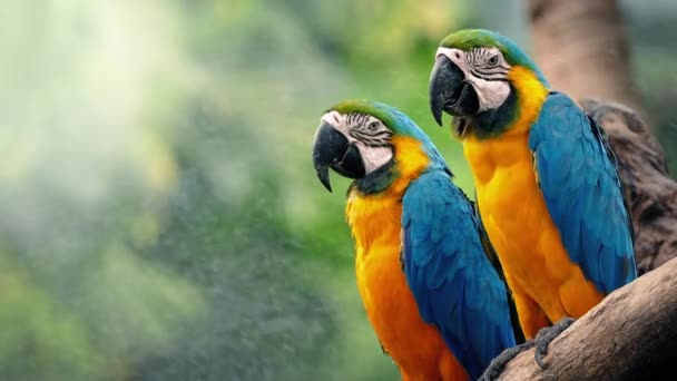 Macaw Parrots On Branch In Tropical Landscape