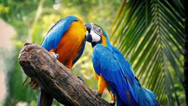 Parrots Fighting With Each Other On Branch