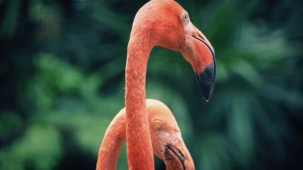 Fenicotteri nel paesaggio tropicale