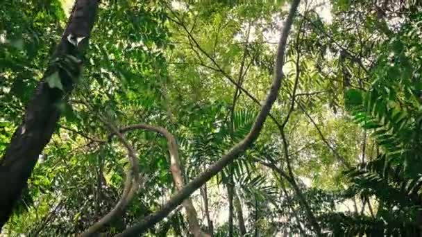 Gliding Under Many Tall Trees In Tropical Forest