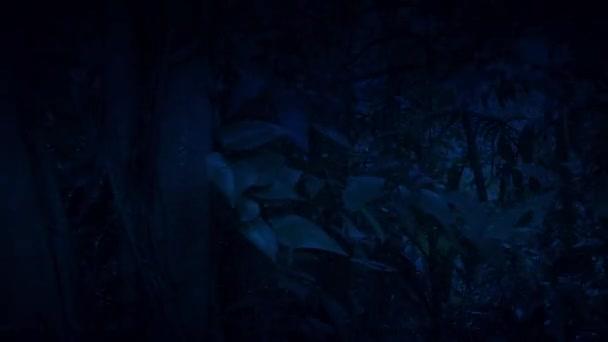 Pohyb mezi hustou džunglí v noci boční pohled