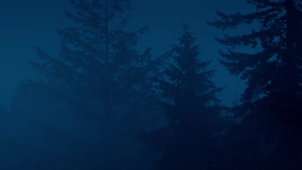 Misty Forest With Tall Trees At Night
