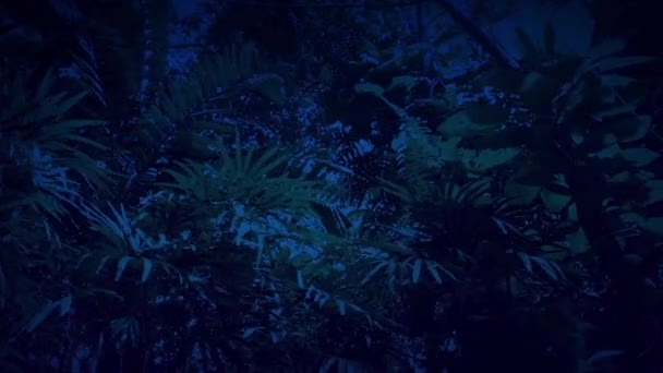 Gliding Under Rainforest Plants And Trees At Night Stock Video