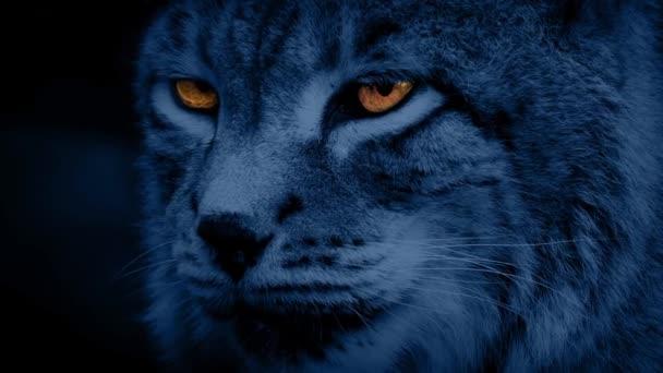 Velká kočka Lynx v noci se zářícíma očima