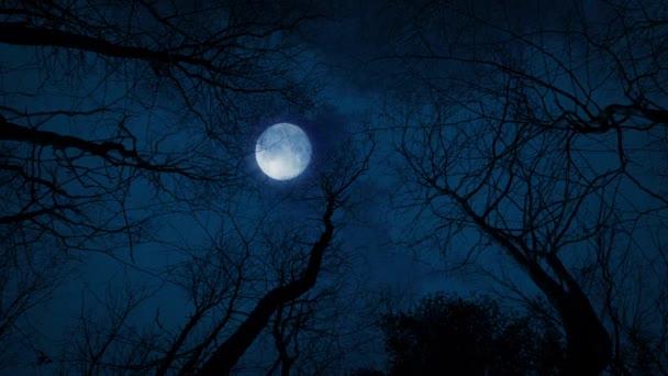 Díval se na měsíc a stromy