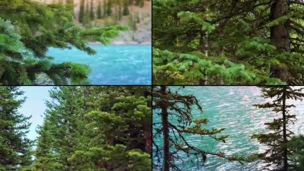 Ventoso alberi Montage