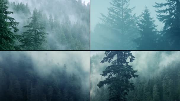 Misty Forest Montage