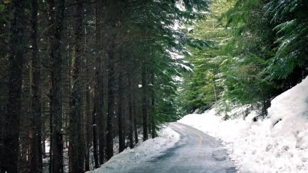 Cesta lesem s sněžení