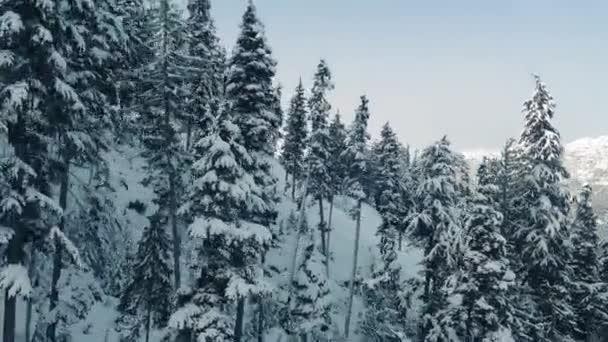 Vzestupné Sněžce strana se stromy