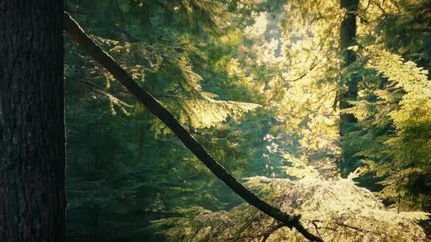 Ranní slunce na stromech v lese