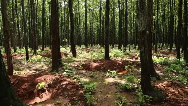 Digging Wholes in Forest To Conserve Rain Water