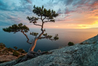 Amazing nature of Crimea, Ukraine: sea, rocks and pines