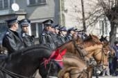 Kůň policie na přehlídce