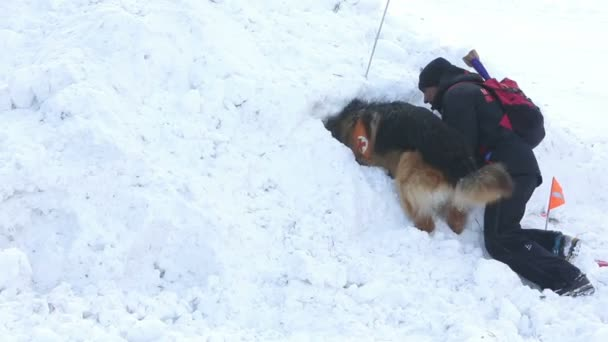 Mountain rescue service dogs