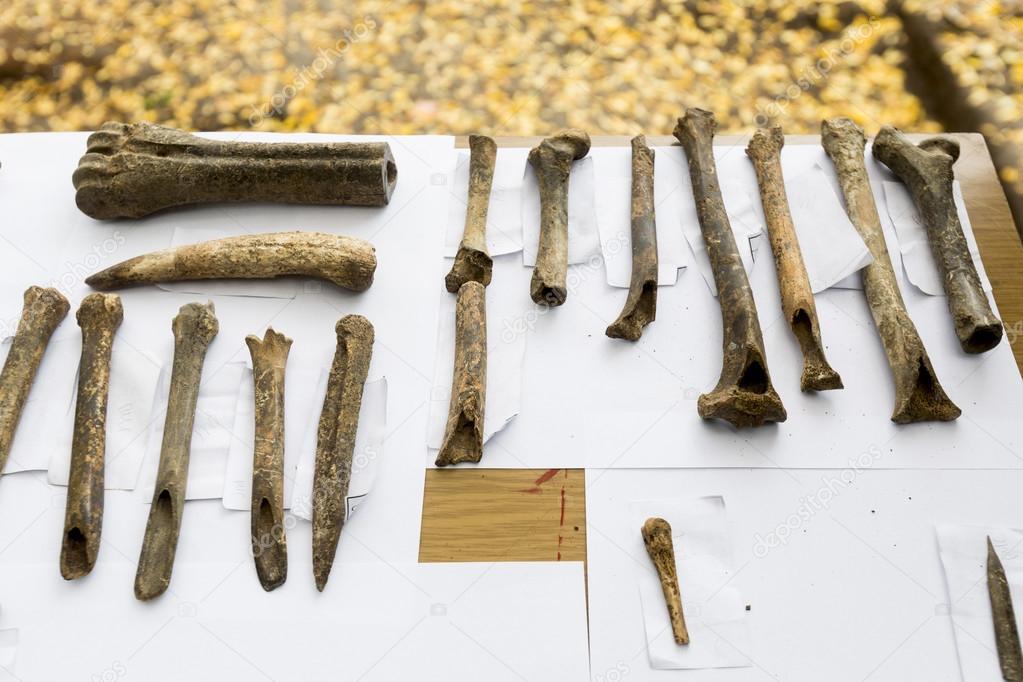 Excavaciones arqueológicas los huesos humanos — Foto de stock ...
