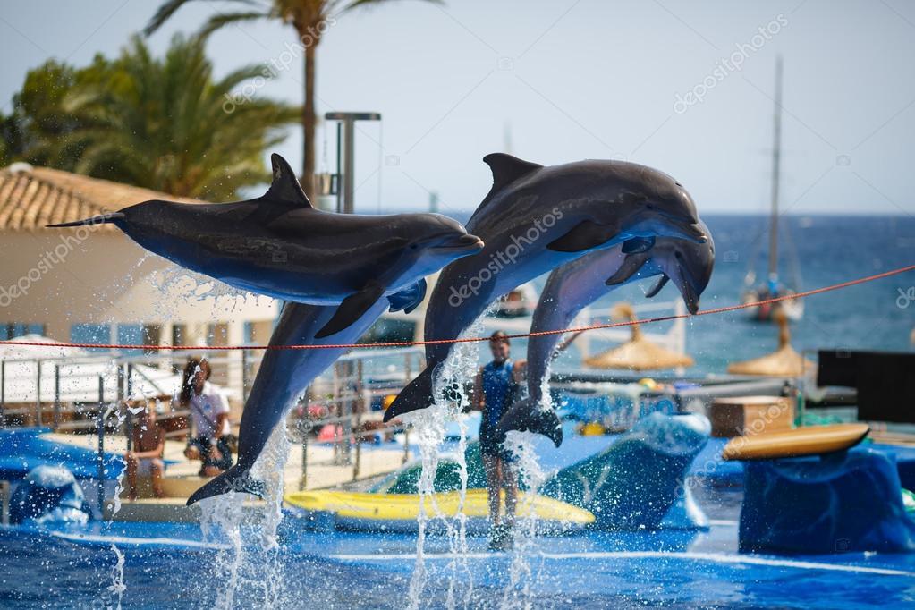 Dolphins show in Palma de Mallorca