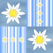 Edelweiss flowers on light blue stripes