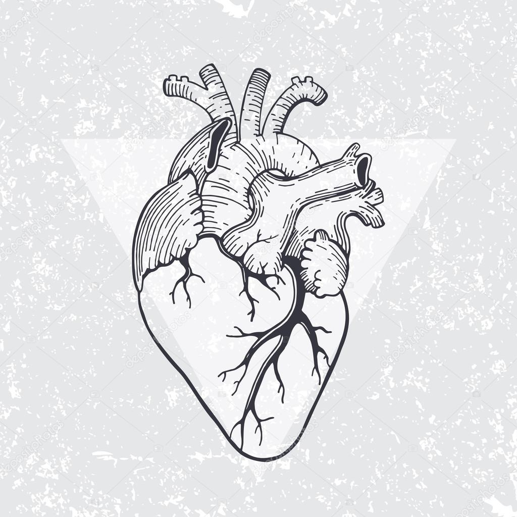 Anatomisches Herz mit Dreieck — Stockvektor © librebird #99788504