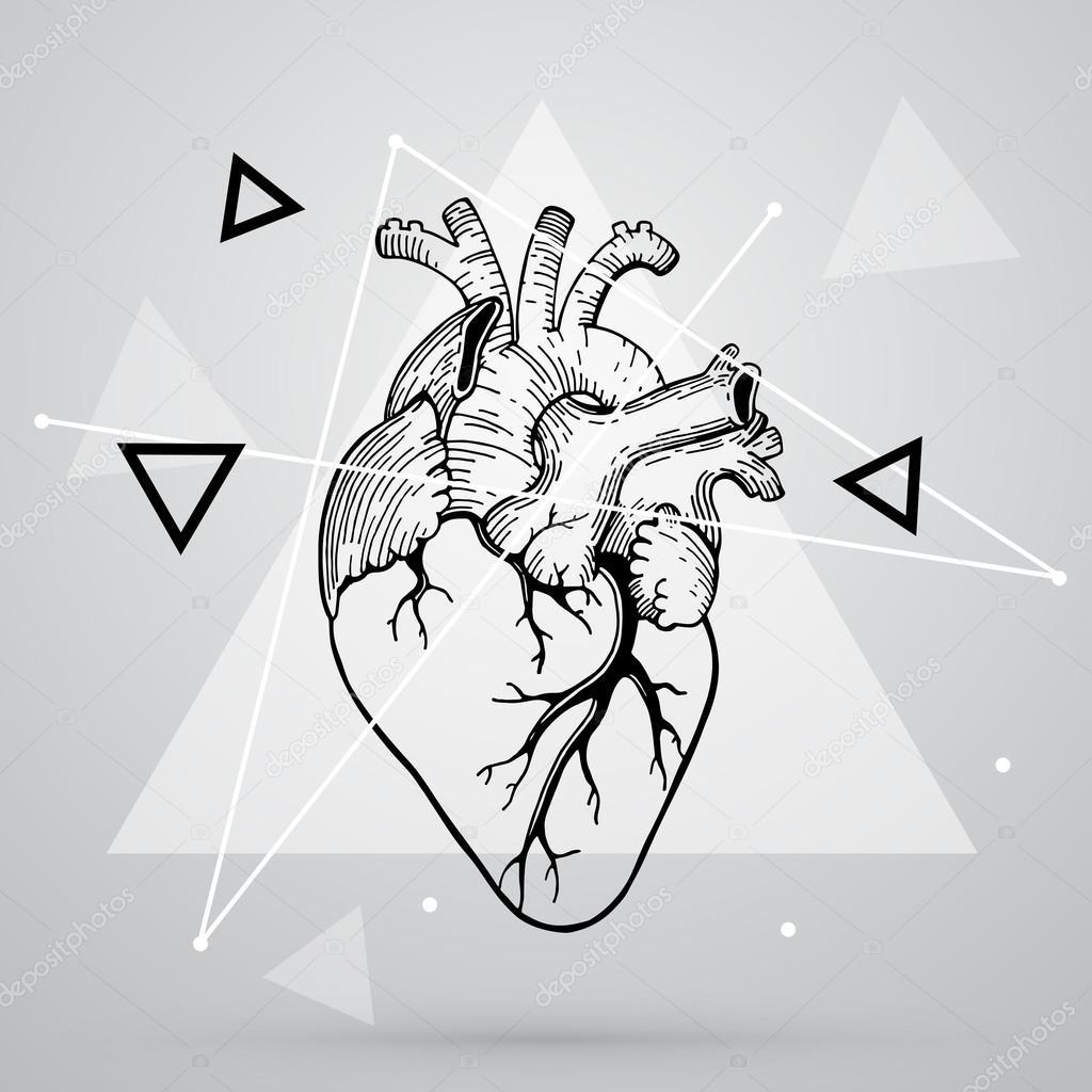 Corazón anatomía realista Vector — Vector de stock © librebird #99788596