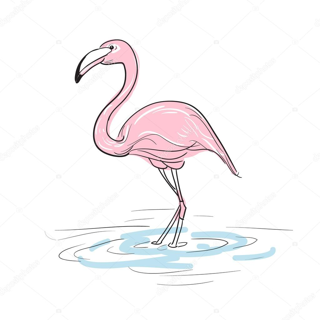 картинки фламинго нарисованные