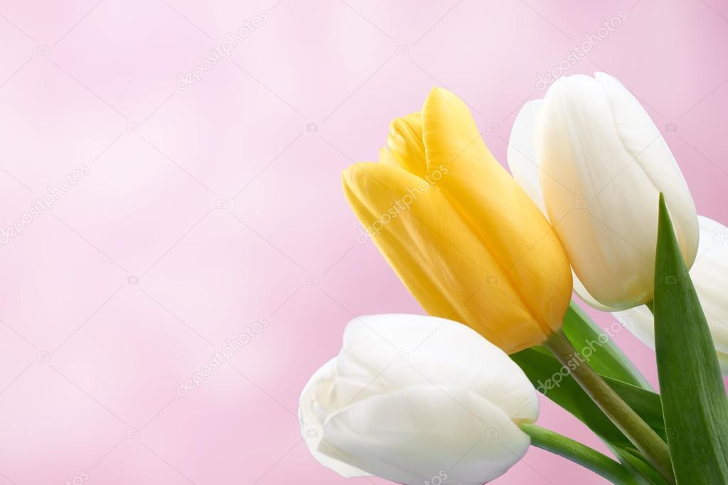 Fresh tulips background. Mothers Day, Easter