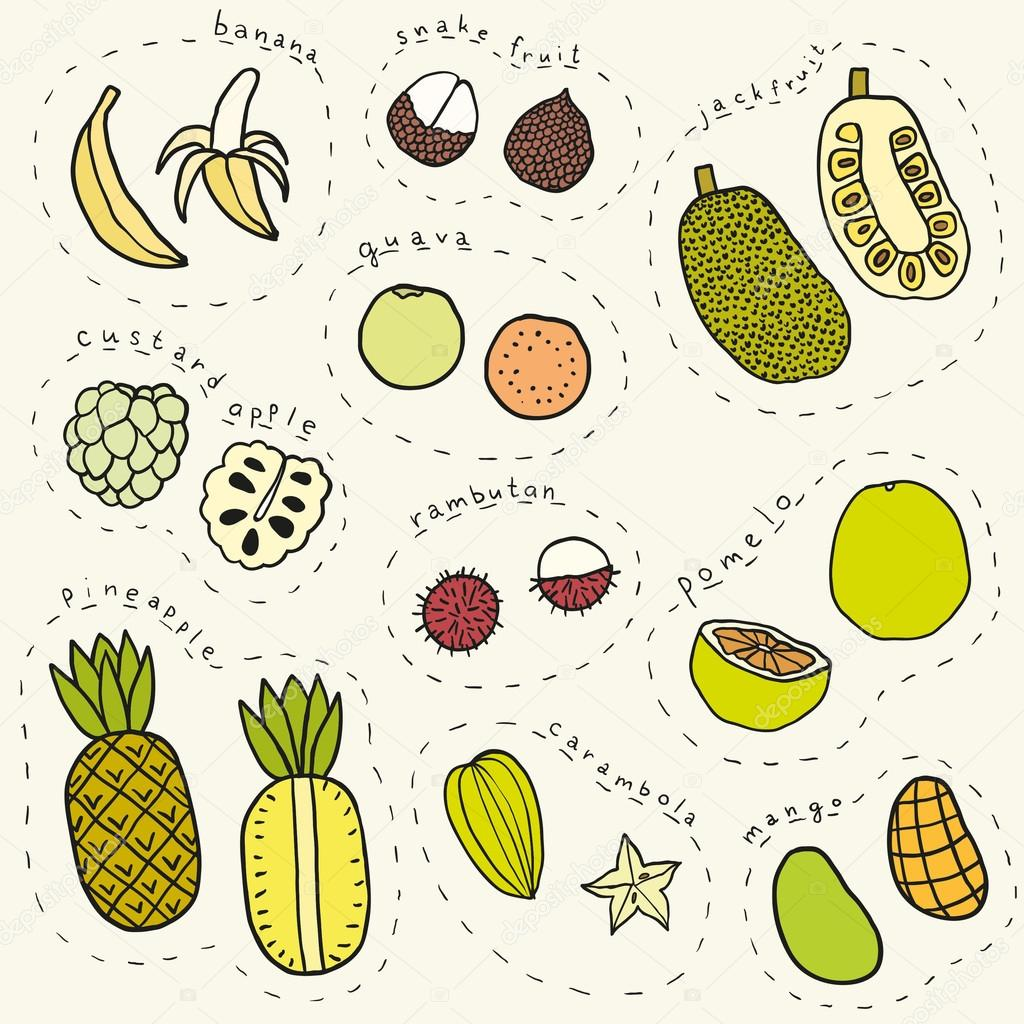 Set of hand drawn tropical fruits part 1