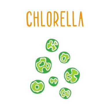 Chlorella.