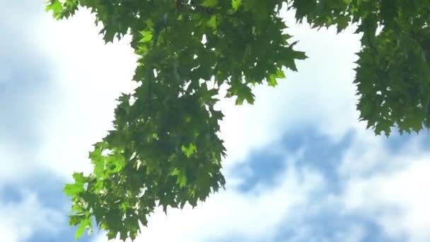 Stromové listí na obloze na pozadí