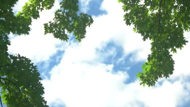 Větve na pozadí oblohy.