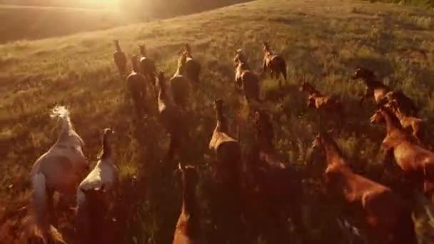 Pferde galoppieren.