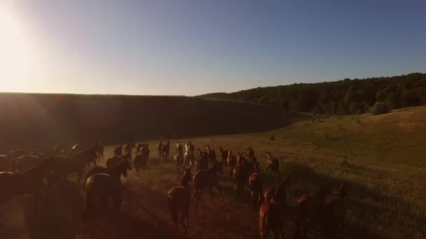 Pferde laufen auf der Weide.