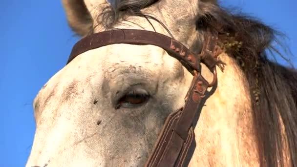 Head of white horse.