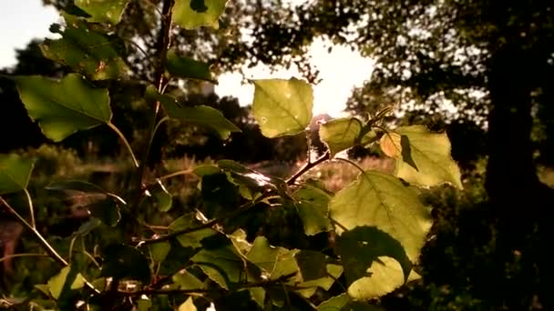 listy stromů na slunci.