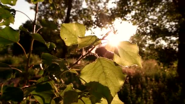 Slunce svítí na strom listy.