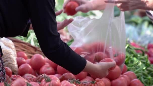 Zblízka si zákazník vybírá rajčata na trhu zeleniny.