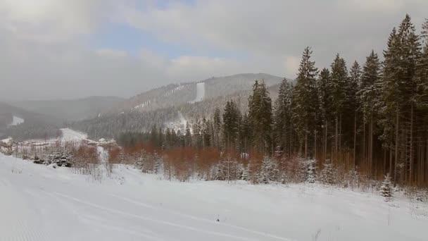 lesní Zimní krajina