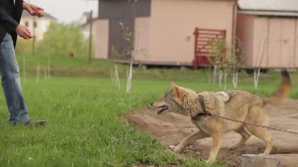 Kéz-wolf