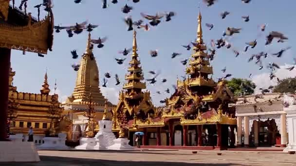 Flying pigeons over the pagodas.
