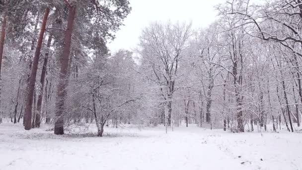 Panorama zimní Les.