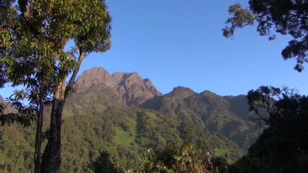 View of forests on the hills the Rwenzori Mountains, Uganda