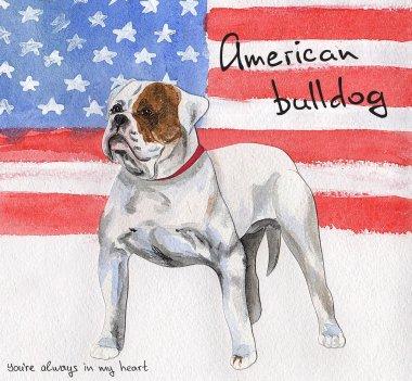 Postcard American Bulldog.