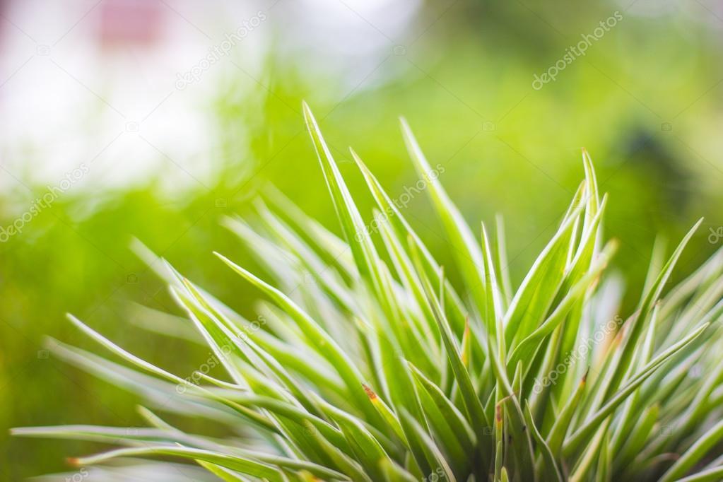 hojas de color verde primavera naturaleza abstracta fondo — Fotos de ...