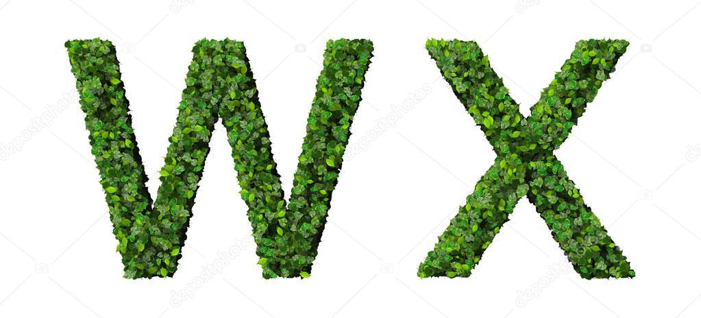 Letras del alfabeto X W confeccionada con hojas verdes aisladas ...