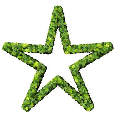 Star or sun made from green leaves.
