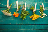 Fotografie Summer fresh medicinal herbs on the wooden background.