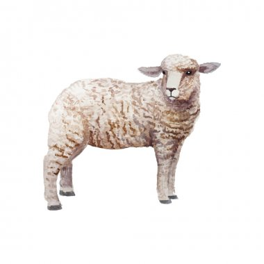 Watercolor vintage lamb standing