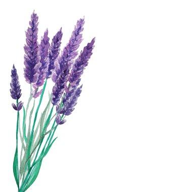 Lavender flowers frame